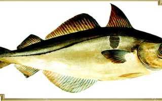 Пикша семейство каких рыб