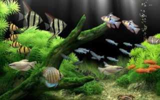 Самые неприхотливые рыбки