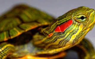 Лампы для черепах сухопутных