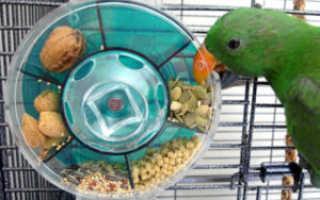 Почему волнистый попугай не ест корм