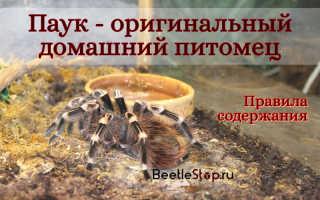 Как содержать домашнего паука