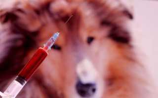 Как усыпить собаку: препараты для эвтаназии, можно ли осуществить процедуру в домашних условиях