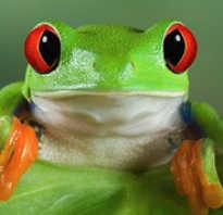 Факты о жабах