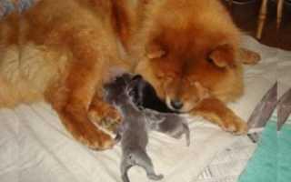Собака белая с рыжими пятнами порода