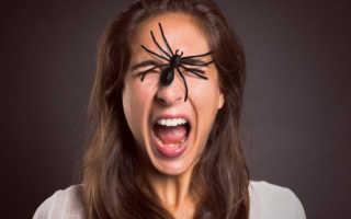 Боязнь пауков как называется эта фобия