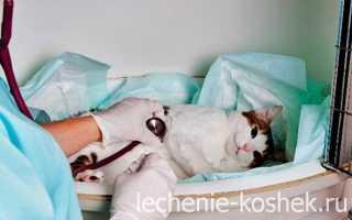Коронавирус у кошек: симптомы, причины и лечение