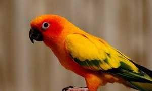 Попугай сломал лапку — что делать при переломе?