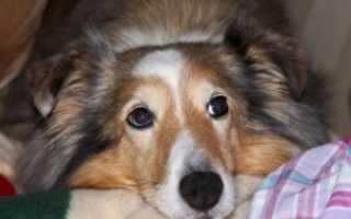 Лекарство от поноса для собак