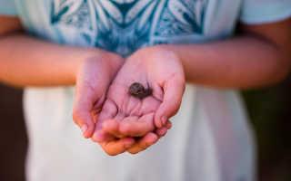 Что едят дикие улитки