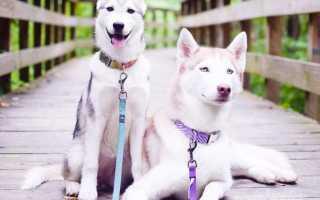 Фото красивых собак породистых