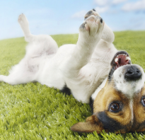 Противоглистные препараты для щенков