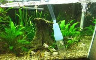 Сифон для аквариума: принцип действия и как сделать своими руками