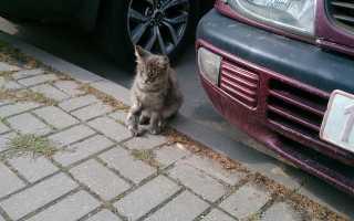 Кошечка-улыбака радуется жизни в новой семье