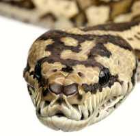 Как зимуют змеи видео