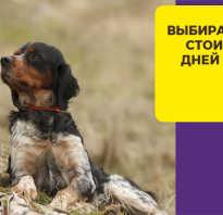 Вес щенка русского спаниеля по месяцам