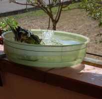 Как приучить попугая купаться