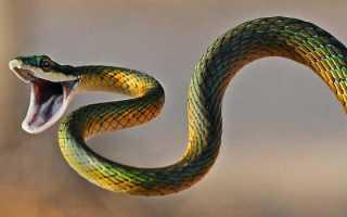 Змея это насекомое или нет