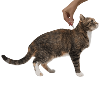 Средство от блох барс для кошек