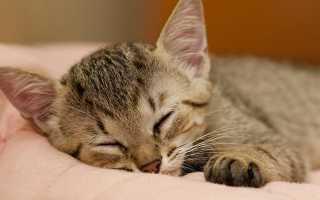 Песня про кота, кошек, котят: известные композиции, ТОП 17 лучших