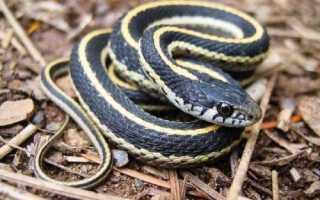 Змея какое животное