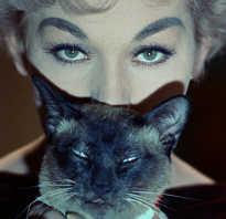Коты Оранж и Джонси — два героя знаменитых кинолент