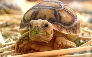 Сколько стоит черепаха в зоомагазине