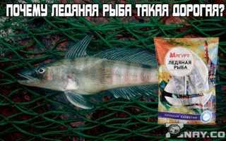 Ледянка рыба фото