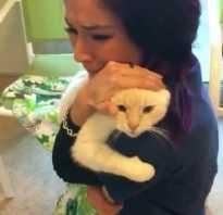 После двух лет поисков женщина нашла своего пропавшего кота