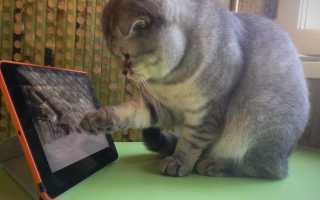 Видео развлечение для кошек