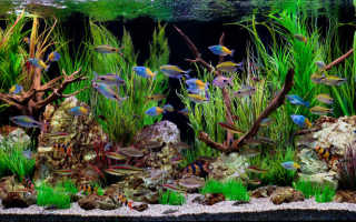 Аквариум и рыбки для начинающих видео
