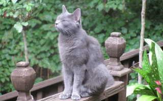 Токсокара у кошек симптомы лечение