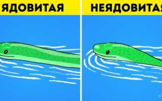 Действие яда змеи