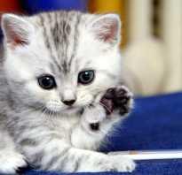 Как приучить кошку к лотку если он все равно ходит везде в туалет: как приучить взрослую кошку и котенка