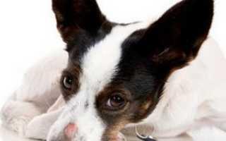 Болезни собак картинки