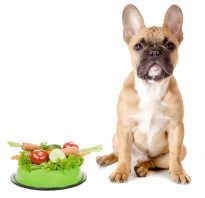 Беременные собаки: витамины и правильное кормление, рейтинг лучших добавок