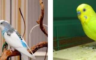 Разновидности попугаев с фото с описанием