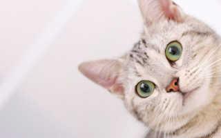 Ковинан для кошек и собак: инструкция по применению, противопоказания