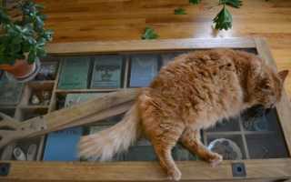 Поведение кота после кастрации, сколько отходит от наркоза