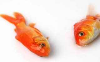 Почему умирают рыбки в аквариуме, что делать?