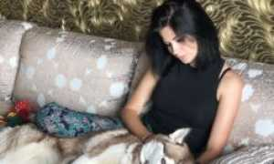 Ложная беременность у собаки: что делать
