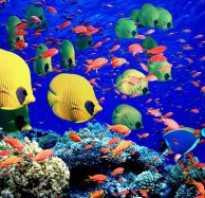 Аквариумные рыбки в природе