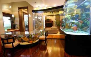 Полезные советы по содержанию аквариумных рыбок