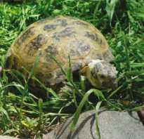 Черепахи к какому классу относятся