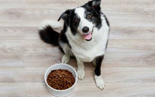 Сколько раз надо кормить собаку