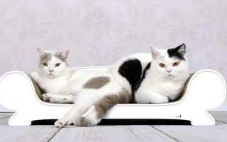 9 лучших породы кошек для детей: какую лучше завести в квартире