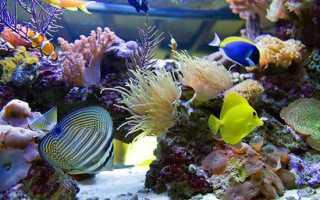 Популярные аквариумные рыбки фото