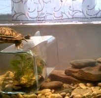 Уровень воды для красноухих черепах