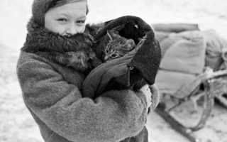 Спасенная от гибели кошка родила под елочкой котят