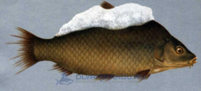 Сапролегниоз рыб: лечение в аквариуме, фото-видео обзор