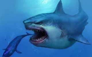 Как охотятся акулы